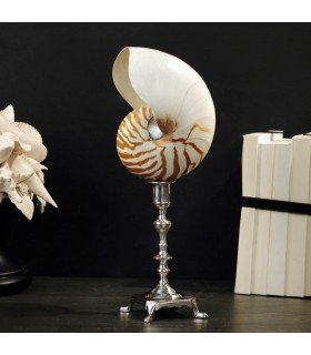 Pearly nautilus of curiosity