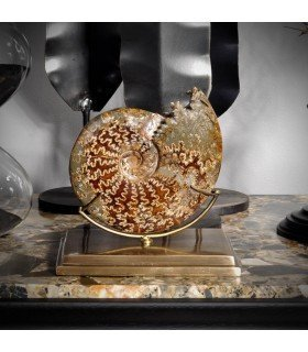 Ammonite curiosity Subject